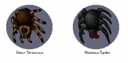 spider 2.png